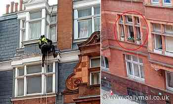 Council sends ABSEILING team to remove windowsill plant pots - all in the name of health and safety