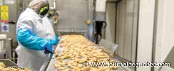 COVID-19: dépistage ciblé à l'usine d'Exceldor à Saint-Anselme