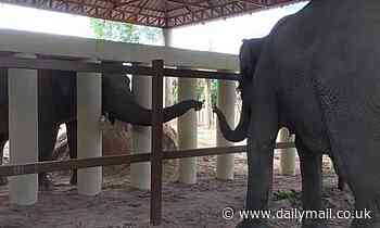 World's loneliest elephant Kaavan makes a friend after being relocated