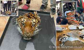 Beheaded tiger is discovered among grim haul animal corpses during raid on a private zoo in Thailand