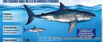 Des nouvelles du plus grand prédateur marin