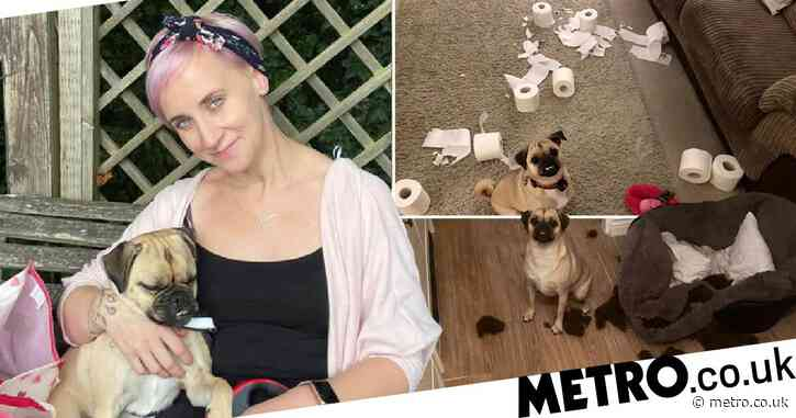Naughty dog chews up her owner's things and then poses next to her mess