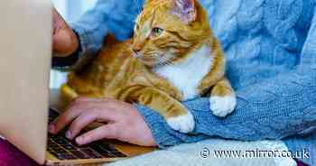 ADVERTORIAL: Working from home with a pet improves our wellbeing, says psychologist