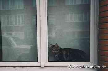 Burgthann: Frau hortet entlaufene Katzen - Besitzer kommt ihr auf die Schliche - inFranken.de