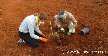 Saint-Chamas : on a planté des arbres pour la Sainte-Catherine - La Provence
