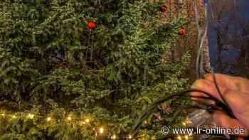 Nach Wildpinkelei in Elsterwerda: Vandalismus an Bad Liebenwerdas Weihnachtsbaum - Lausitzer Rundschau