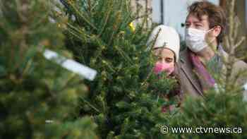 High demand for Christmas trees sparking worries of a holiday shortage