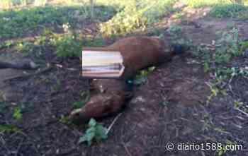 Rara coincidencia: caballos mutilados en Corrientes y Mercedes - 1588