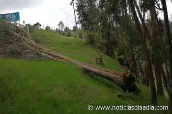 Pasca sin servicio eléctrico por caída de árbol sobre el tendido - Noticias Día a Día