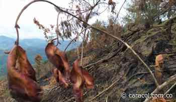 Buscan responsables de incendio en Charta - Caracol Radio