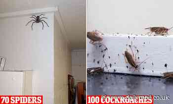 Pest controller says Australians can expect 100 cockroaches and 70 SPIDERS are living in their house