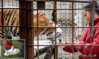 French zoo where guests could feed cheese and whipped cream to lions and tigers has animals seized