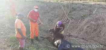 Bombeiros resgatam cavalo e filhotes de cães em ações na Pacatuba e Fortaleza - Ceará
