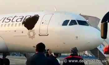 Passenger planes ground in India after massive swarm of bees land on them