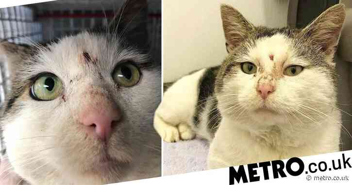 Cat that survived being shot in the head is now looking for a new home