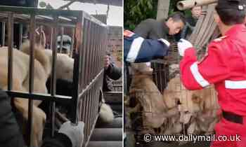 Dozens of dogs 'to be butchered to order and made into sausages' are rescued in China