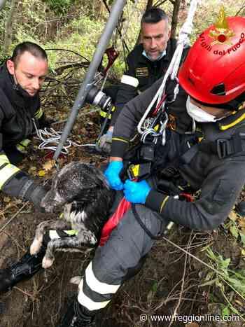 Viano: cane cade in un pozzo, salvato dai vigili del fuoco. FOTO - Reggionline