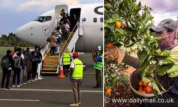 Fruit pickers from Timor-Leste board Qantas plane to Australia to harvest fruit