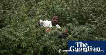 Reefer gladness as UN reclassifies cannabis as less dangerous drug