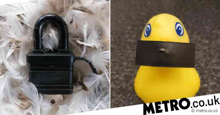 A 'Lockdown' padlock on a pile of feathers wins the 2020 Turnip Prize for rubbish art
