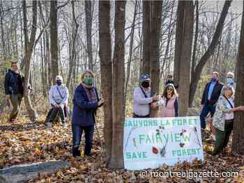 'Save Fairview Forest' group vows more protests during holiday shopping season