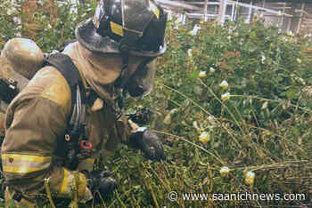 Small fire extinguished at Brentwood Bay flower farm – Saanich News - Saanich News