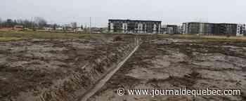 Habitat de la rainette faux-grillon endommagé par des travaux illégaux à Longueuil