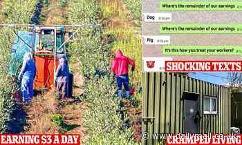 Backpackers are paid as little as $3 an hour picking fruit