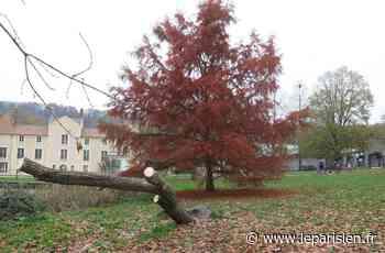 Bures-sur-Yvette : ils viennent enlever un arbre mort, ils découpent le grand saule du parc - Le Parisien
