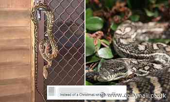That's not a Christmasssss decoration! Woman shocked to find a huge snake around her door handle