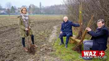 Aufforstung: In Herne werden mehrere tausend Bäume gepflanzt - Westdeutsche Allgemeine Zeitung