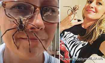 Spider enthusiast films a monster huntsman crawling over her FACE