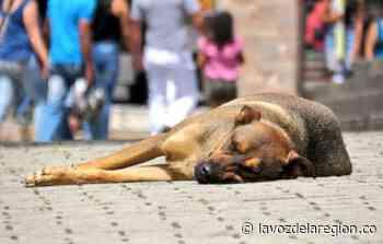 Convocan donaton para construir un centro de atención animal en Tesalia - Noticias