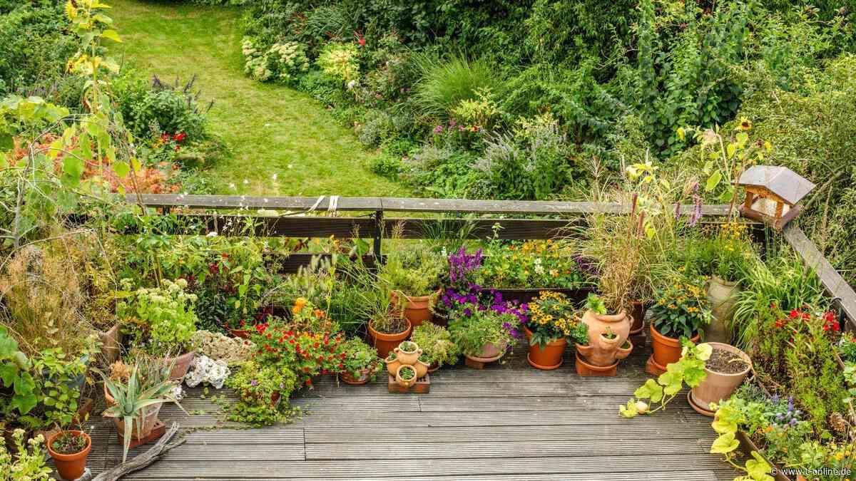 Wolfsburg: So umweltfreundlich sind die Gärten und Balkone der Stadt - t-online.de