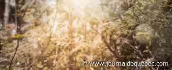 PHOTO | Un photographe croise une famille de lynx dans Charlevoix