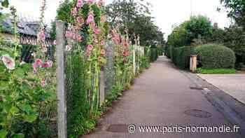 Près de Rouen, la Ville de Bois-Guillaume met en place un permis de végétaliser - Paris-Normandie