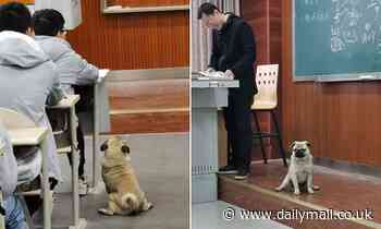 Dog studies maths: Stray 'attends' an algebra lecture alongside undergraduates