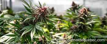 États-Unis : une loi historique sur la dépénalisation du cannabis avance au Congrès