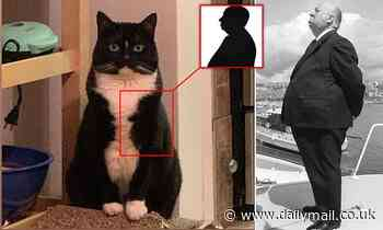 It's Alfred Hitch-Cat! Director makes his most unexpected cameo yet