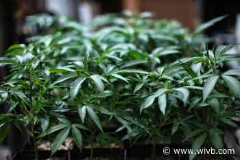 House of Representatives passes bill to decriminalize marijuana, heads to the Senate