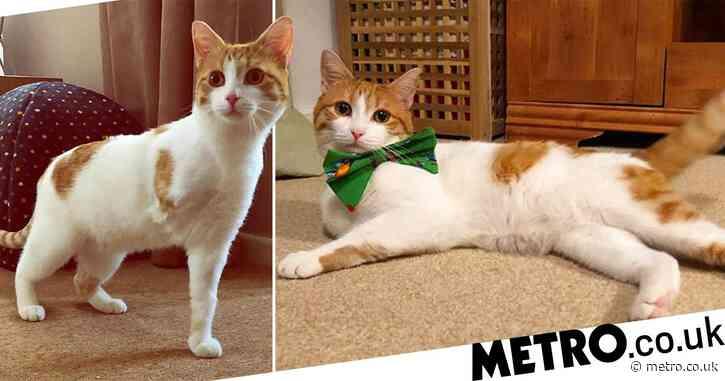 Three-legged cat overcomes traumatic past to land job as a model