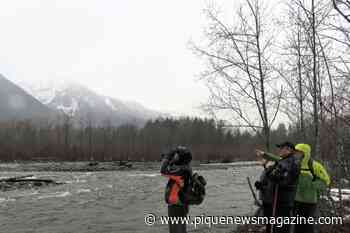 Brackendale Winter Eagle Count logs over 1,000 sightings | Sea to Sky - Pique Newsmagazine