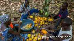 Cote d'Ivoire cocoa growers step up campaign against chocolate giants - CGTN