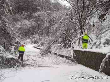 Neve e piante cadute: Volontari Aib di Valdilana, Crevacuore e Val Sessera in azione FOTO e VIDEO - newsbiella.it