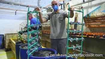 Fabricação de torneiras gera emprego e renda em Loanda e região - ® Portal da Cidade   Paranavaí