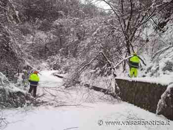 Neve e piante cadute: Volontari Aib di Valdilana, Crevacuore e Val Sessera in azione FOTO e VIDEO - valsesianotizie.it