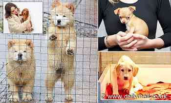 Britain's secret shelters for smuggled puppies come under siege from European gangsters