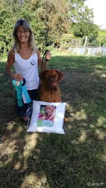 Sailly-Flibeaucourt : Graines de champions chez les dogues de Bordeaux de Gladine - actu.fr