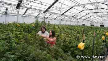 US House votes to decriminalize marijuana, little chance in current Senate - DW (English)