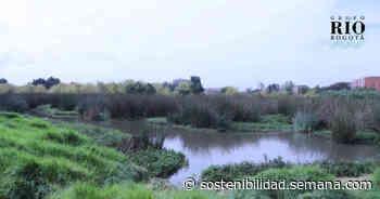 EN VIDEO: Reverdecen el humedal Capellanía con más de 400 árboles - Semana